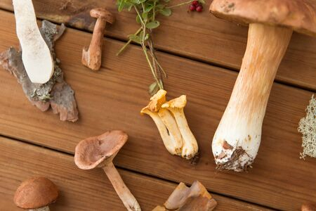 nature and environment concept - different edible mushrooms on wooden background