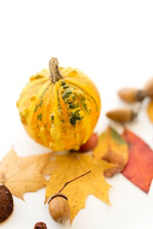 nature, season and botany concept - close up of pumpkin, acorns and autumn leaves on white background Stock Photo