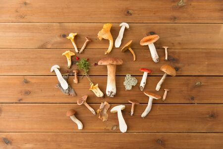 different edible mushrooms on wooden background