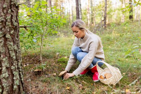 young woman picking mushrooms in autumn forest Banque d'images