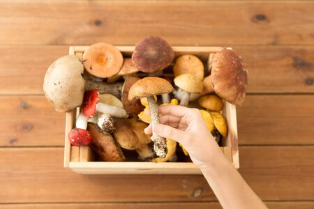 hand holding boletus over box of edible mushrooms