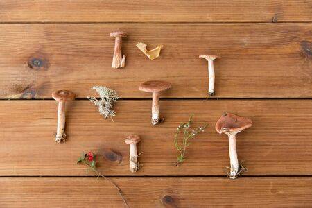 lactarius rufus mushrooms on wooden background