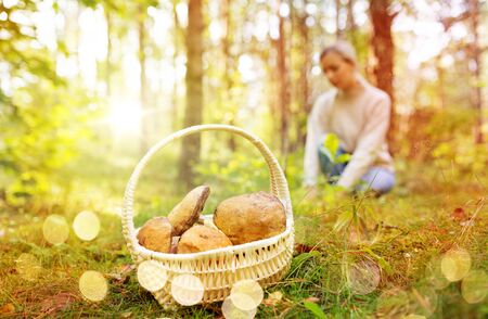 Basket of mushrooms and woman in autumn forest Stock Photo