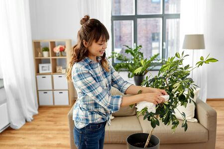 happy asian woman cleaning houseplant at home