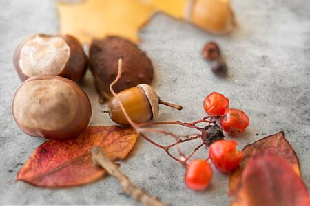 chestnuts, acorn, autumn leaves and rowanberries Imagens