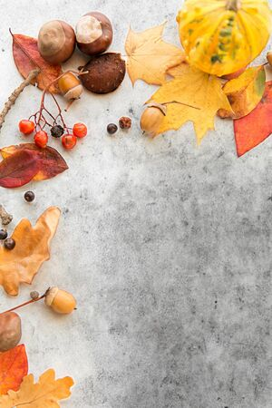 autumn leaves, chestnuts, acorns and berries frame 写真素材