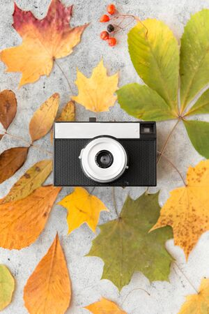film camera and autumn leaves on gray stone