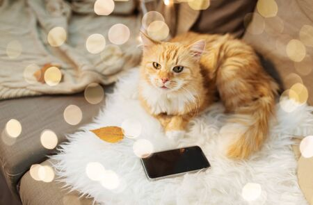 red cat lying on sofa with smartphone at home