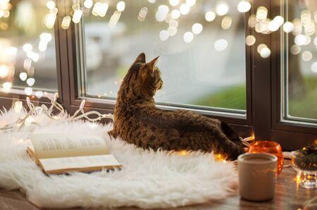tabby cat lying on window sill with book at home Stockfoto