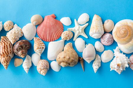 different sea shells on blue background