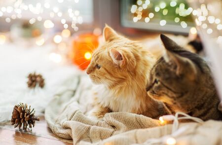 Two cats lying on window sill with blanket at home Reklamní fotografie