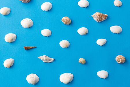 Different sea shells on blue
