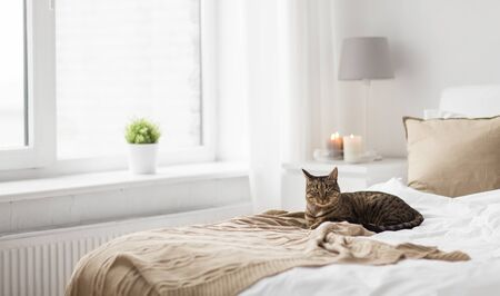 cat lying on bed with blanket at home in winter