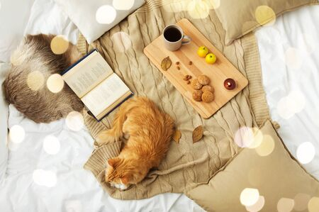 pets, hygge and domestic animal concept - red tabby cat lying on blanket with book, lemon tea and oatmeal cookies at home in winter