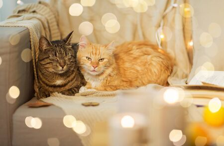 pets, hygge and christmas concept - two cats lying on sofa at home in winter Reklamní fotografie - 130228860