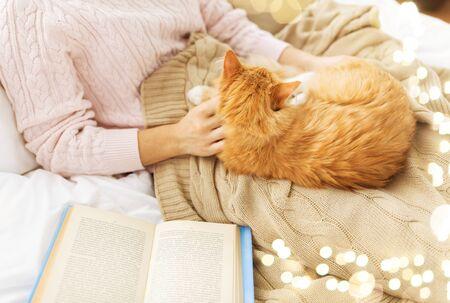 Cerca del propietario acariciando gato rojo en la cama en casa Foto de archivo