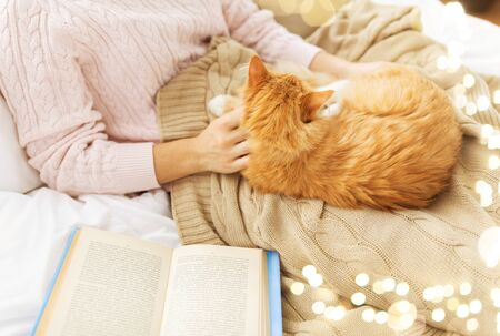 close up of owner stroking red cat in bed at home Banque d'images