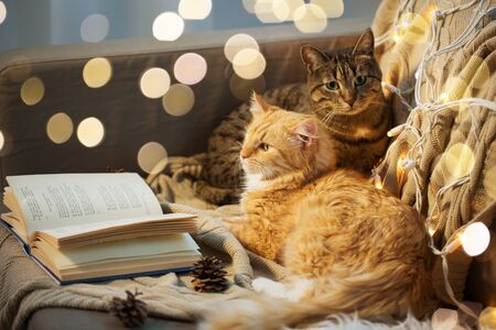 two cats lying on sofa with book at home Reklamní fotografie - 130745599
