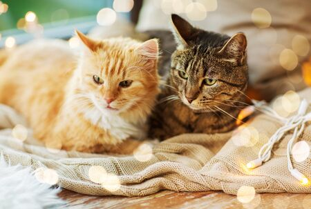 pets, christmas and hygge concept - two cats lying on window sill with blanket at home Reklamní fotografie - 131047009