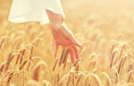 close up of woman hand in cereal field Stock Photo
