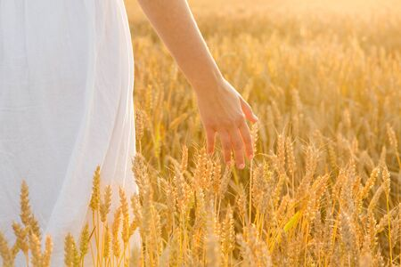 harvesting, nature, agriculture and prosperity concept - young woman on cereal field touching ripe wheat spickelets by her hand