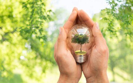 Concepto de conservación, medio ambiente y ecología - cerca de las manos sosteniendo la bombilla con el árbol en el interior sobre fondo verde natural Foto de archivo