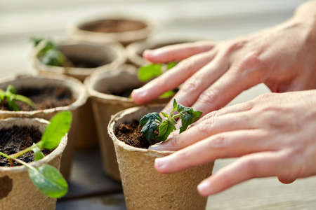 hands and seedlings in starter pots with soil