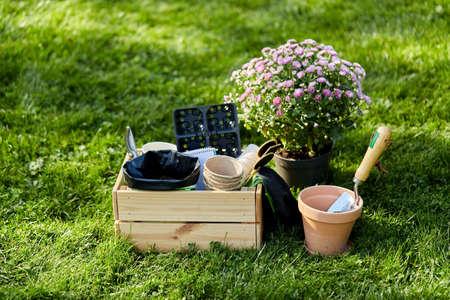 garden tools in wooden box at summer Zdjęcie Seryjne