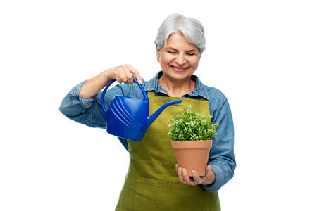 senior gardener with flower and watering can Stock Photo