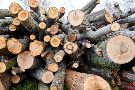 trunks of felled trees or logs outdoors in autumn