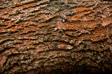 close up of tree trunk bark texture