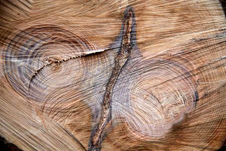 close up of cross-section of felled tree Фото со стока