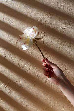 hand holding white flower over beige background