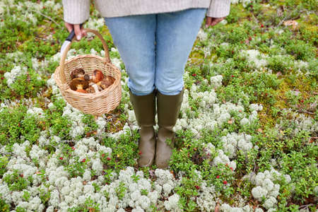 woman with basket picking mushrooms in forest Foto de archivo