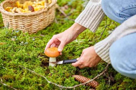 young woman picking mushrooms in autumn forest Foto de archivo