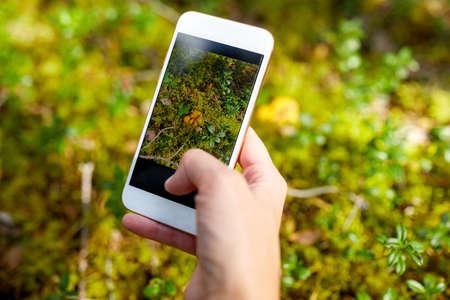 hand using smartphone to identify mushrooms Foto de archivo