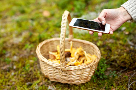 hand with smartphone and mushrooms in basket