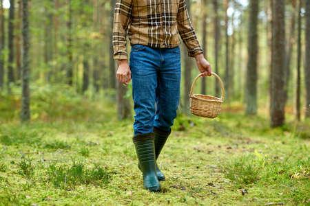man with basket picking mushrooms in forest Foto de archivo