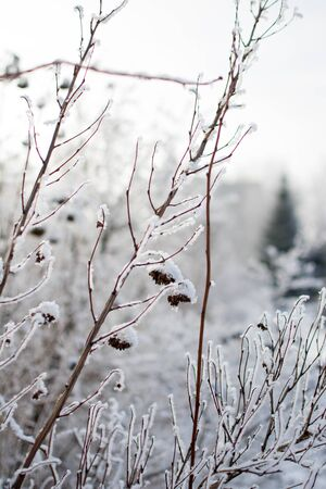 frost winter: the image shows some snowy trees. Winter. Stock Photo