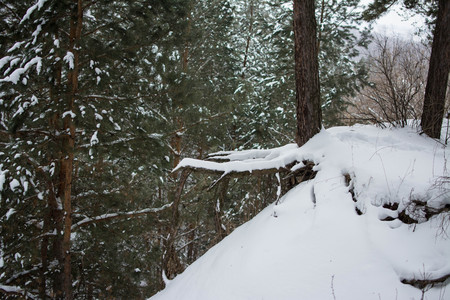 macrophoto: the hanging roots of a tree over a ravine. Russian winter.