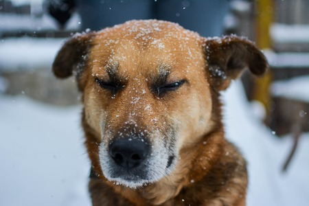 mongrel: Portrait of mongrel in the streets at wintrer. Outdoor. Stock Photo