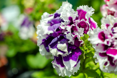 many summer flowers of different colors background Stock fotó