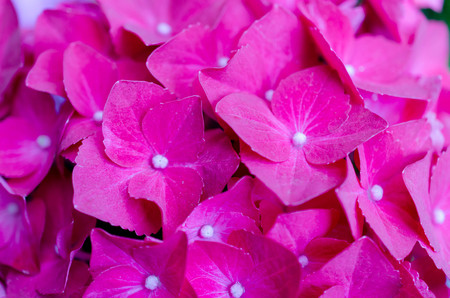 Beautiful pink flowers, floral background. Imagens