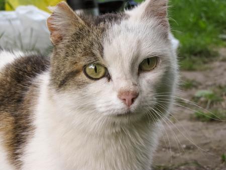 A cute homeless cat with torn ear close up Stok Fotoğraf