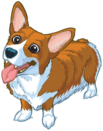 Vector cartoon clip art illustration of a cute and happy welsh corgi dog or puppy with its head cocked to one side, mouth open, and toungue hanging out. Ilustração