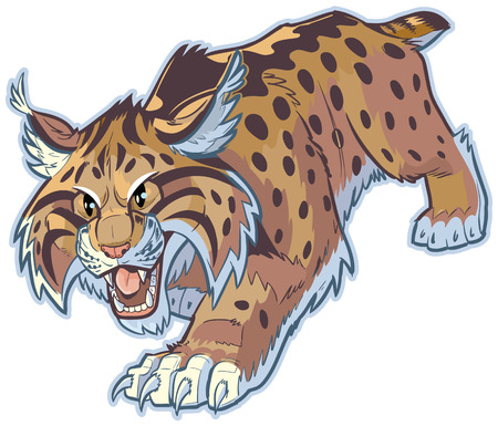 lynx: Vector cartoon clip art illustration of a hungry bobcat or wildcat mascot stalking its prey. This cat is crouched low with its mouth open, and its front claws are out.