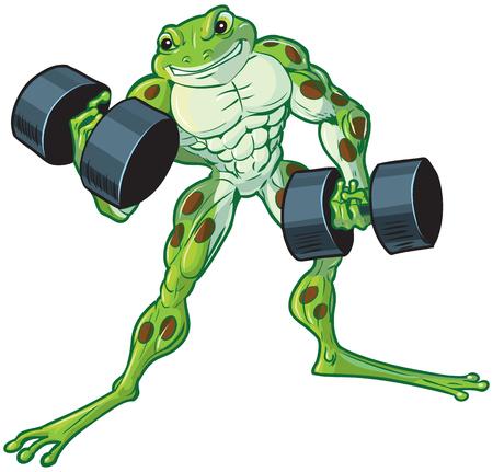 カーリングやダンベルを持ち上げる厳しい筋肉重量挙げカエルのベクトル漫画クリップ アート イラスト。  イラスト・ベクター素材