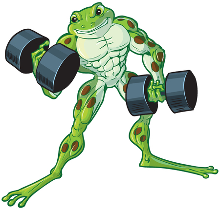 Vector cartoon clip art illustration of a tough muscular weightlifting frog curling or lifting dumbbells.