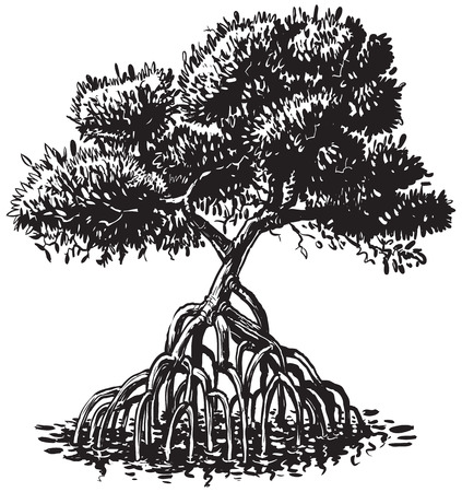 Vector cartoon clip art illustration of a black and white or monochromatic ink drawing of a mangrove tree.