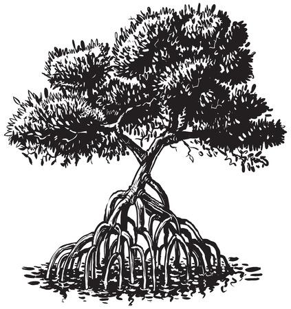 Vector cartoon illustratie van de klemkunst van een zwart-wit of monochroom inkttekening van een mangrove boom.